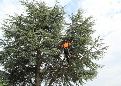Træpleje