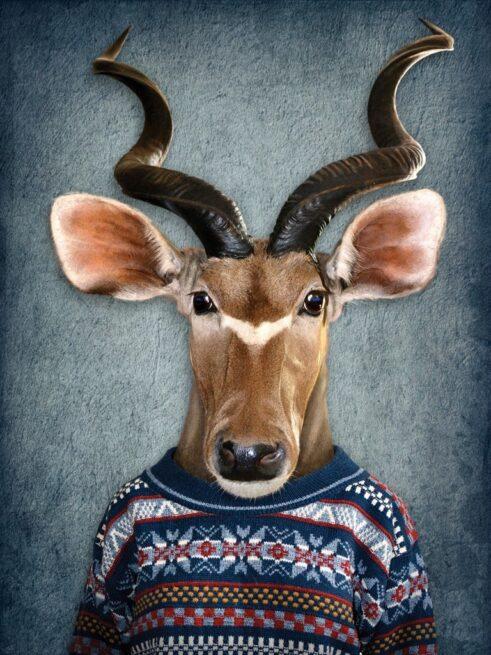 Antelope i trøje - Plakat