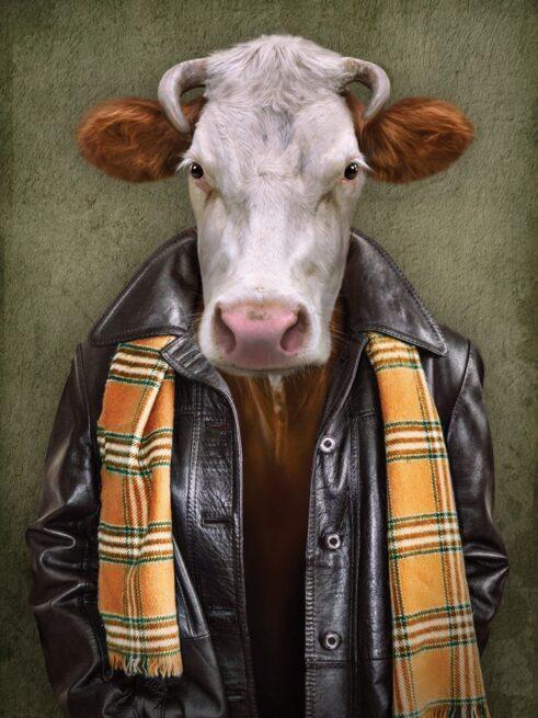 Ko i jakke - Plakat
