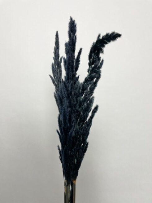 Sort Eryanthus