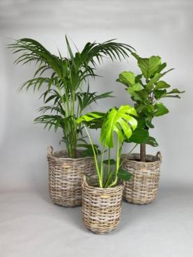 Plantekurv
