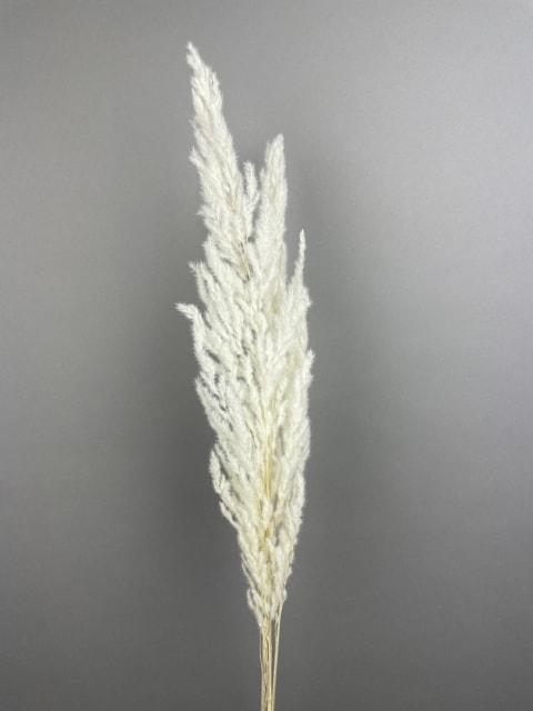 Eryanthus