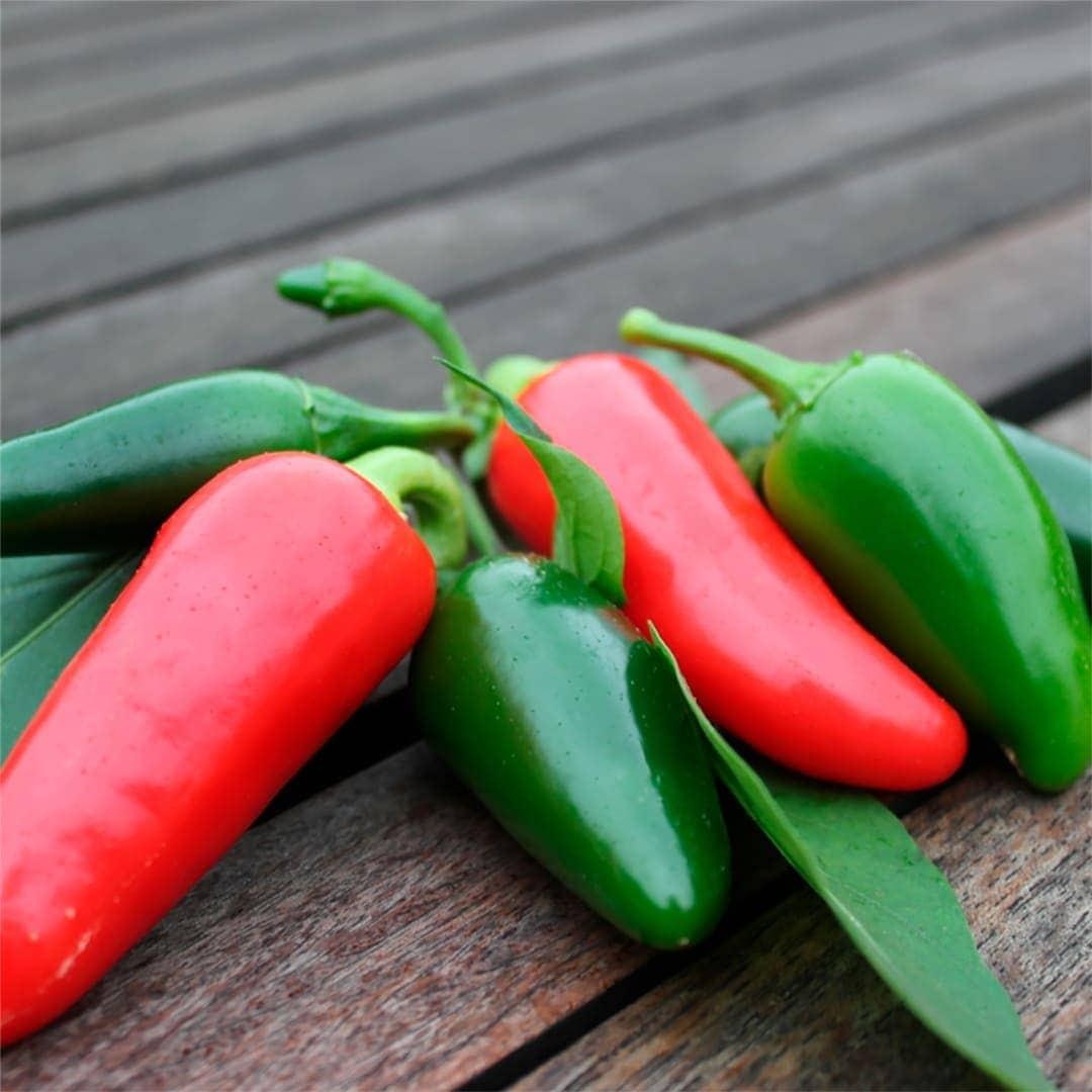Early Jalapeno Chili