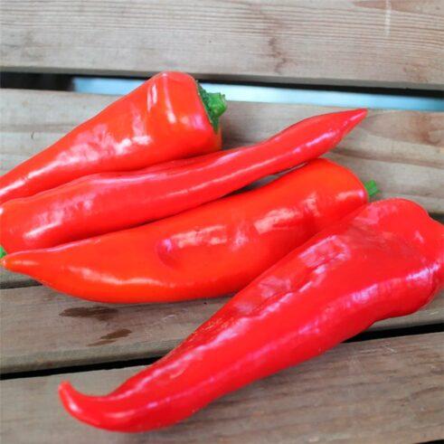 Rød Snack Peber Lipari