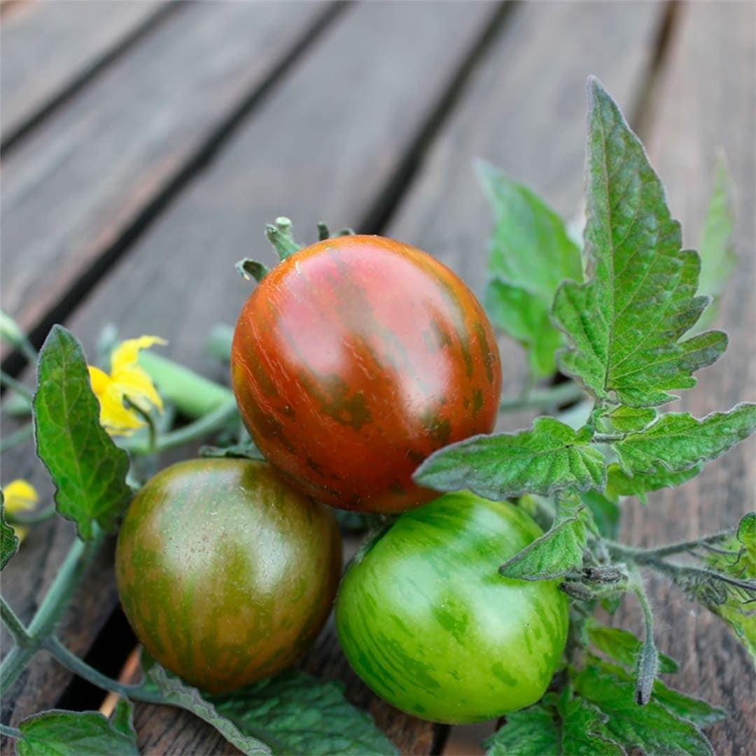 Tiger Cocktail Tomat