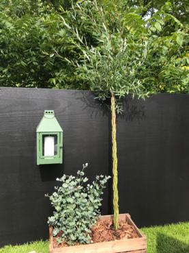 Mini Væglanterne - Olivengrøn